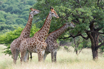 Tailor Made Safaris Winelands Cape Town