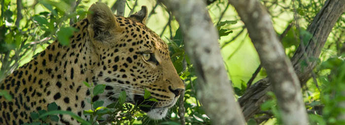 Go wild! Explore the Kruger and so much more...